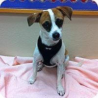 Adopt A Pet :: Jomax - Gilbert, AZ