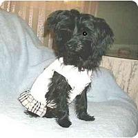 Adopt A Pet :: Annie - Mooy, AL
