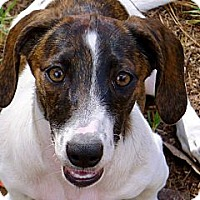 Adopt A Pet :: Savannah the Princess Puppy - Ocala, FL