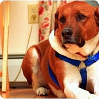 Adopt A Pet :: Trevor - Courtesy Post - New Boston, NH