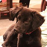 Adopt A Pet :: Sadie - Bowie, MD