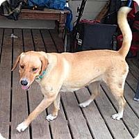 Adopt A Pet :: Georgia - Houston, TX