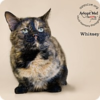 Adopt A Pet :: Whitney - Phoenix, AZ