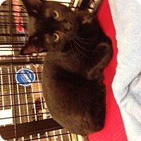 Adopt A Pet :: Alexander - Simpsonville, SC