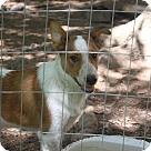 Adopt A Pet :: Razz