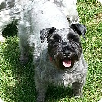 Adopt A Pet :: Maggie - Laurel, MD