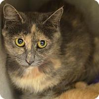 Adopt A Pet :: Pebbles (foster care) - Philadelphia, PA