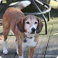 Adopt A Pet :: JoJo Henderson - Waldorf, MD