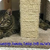 Adopt A Pet :: Chasity - Siler City, NC
