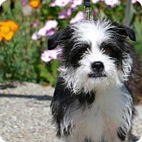Adopt A Pet :: Penny - Corona, CA