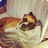 Adopt A Pet :: Chloe - Wilmington, NC