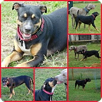 Adopt A Pet :: Star - Davenport, FL