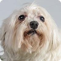 Adopt A Pet :: Hula - Colorado Springs, CO