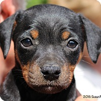 Adopt A Pet :: Fernando - Bedford, VA