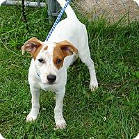 Adopt A Pet :: Bindi - Delaware, OH