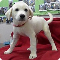 Adopt A Pet :: Diesel - Manning, SC