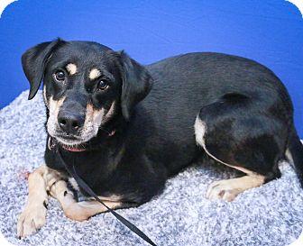 German Shepherd Dog/Rottweiler Mix Dog for adoption in Loogootee, Indiana - Lucky