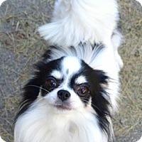 Adopt A Pet :: Jay-ADOPTED - Livonia, MI