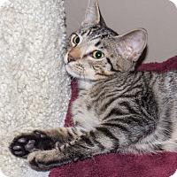 Adopt A Pet :: Oscar - Elmwood Park, NJ