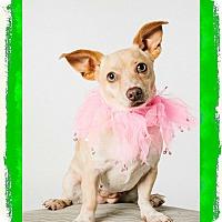 Adopt A Pet :: Hillary - Nanuet, NY