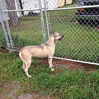 Adopt A Pet :: Sheba - Fort Myers, FL