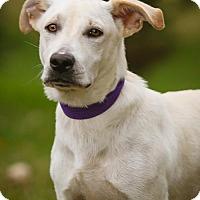 Adopt A Pet :: Clarence - Princeton, MN
