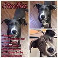 Adopt A Pet :: Electra - Colmar, PA