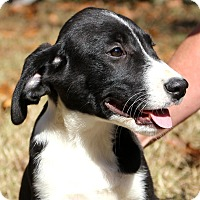 Adopt A Pet :: Calamity~adopted! - Glastonbury, CT