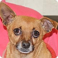 Adopt A Pet :: Peanut 2 - Spokane, WA