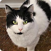 Adopt A Pet :: Vanna - Dunkirk, NY