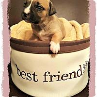 Adopt A Pet :: Keren - Monroe, NC
