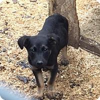 Adopt A Pet :: Max - Coldwater, MI
