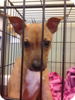 Almost Home Dog Rescue Ny