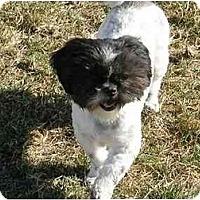 Adopt A Pet :: Grover - Meridian, ID