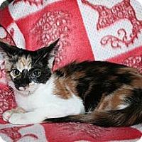 Adopt A Pet :: Cabernet - Santa Rosa, CA