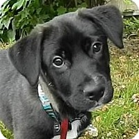 Adopt A Pet :: Cajun - Haverhill, MA