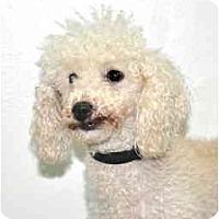 Adopt A Pet :: Willow - Port Washington, NY