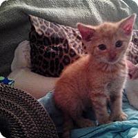 Adopt A Pet :: Kerry - Brooklyn, NY