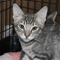 Adopt A Pet :: Hansel - Richmond, VA
