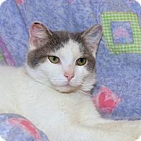 Adopt A Pet :: Tally - Medina, OH