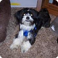 Adopt A Pet :: Diamond - LEXINGTON, KY