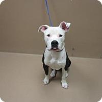 Adopt A Pet :: KLEO - Reno, NV