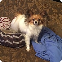 Adopt A Pet :: Penny (Courtesy listing) - Gig Harbor, WA