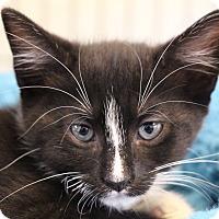 Adopt A Pet :: Emcee - Sarasota, FL