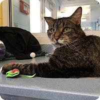 Adopt A Pet :: Charlie - Jackson, NJ