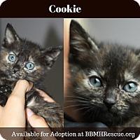 Adopt A Pet :: Cookie - Temecula, CA