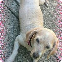 Adopt A Pet :: Pending!!Phoebe - OH - Tulsa, OK