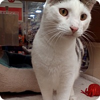 Adopt A Pet :: Houdini - West Dundee, IL