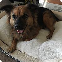 Adopt A Pet :: Remi - Aurora, IL