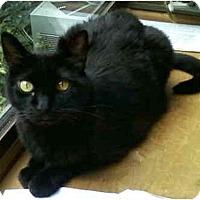 Adopt A Pet :: Gracie - St. Louis, MO